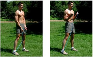 Fiches pratiques et vid os les biceps avec elastique for Elastique musculation
